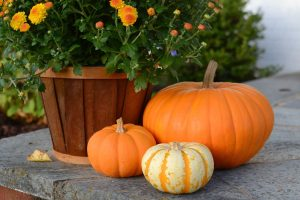 Various sized pumpkins, basket orange yellow mums on porch as fall or autumn decor decorations.